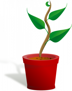 green plant with 4 leaves in   a bright red pot